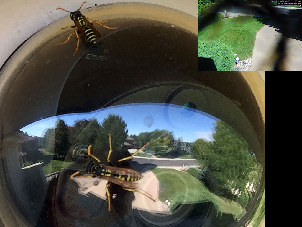 webcam with wasps