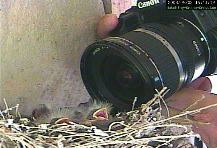 finch sleeping camera