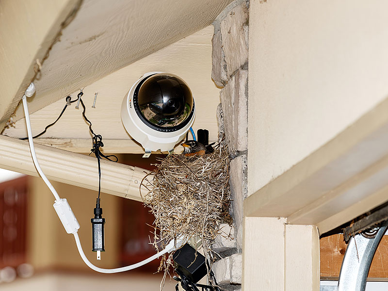 robin nest webcam1
