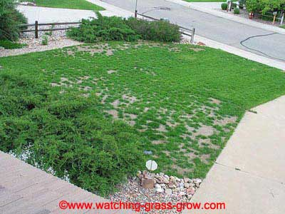 how to make grass grow slower