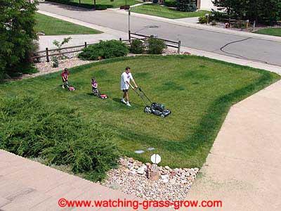 watching_grass_grow_2004_06_20.jpg